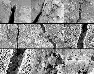 hormigon autorepara bacterias detalle