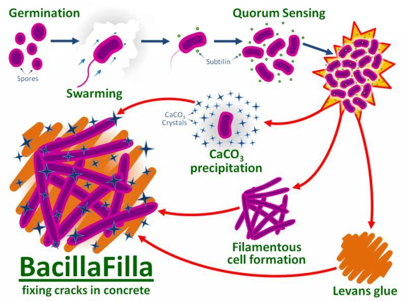 bacteria de hormigón autoreparable