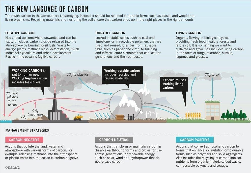 Esquema con el ciclo del carbono