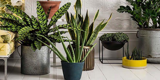 Imagen de salón con muchas macetas y plantas diferentes