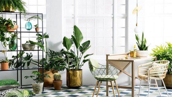plantas de interiores verdevega